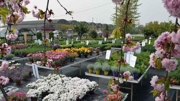 Piante da esterno e da interno celebrin garden for Piante colorate da esterno